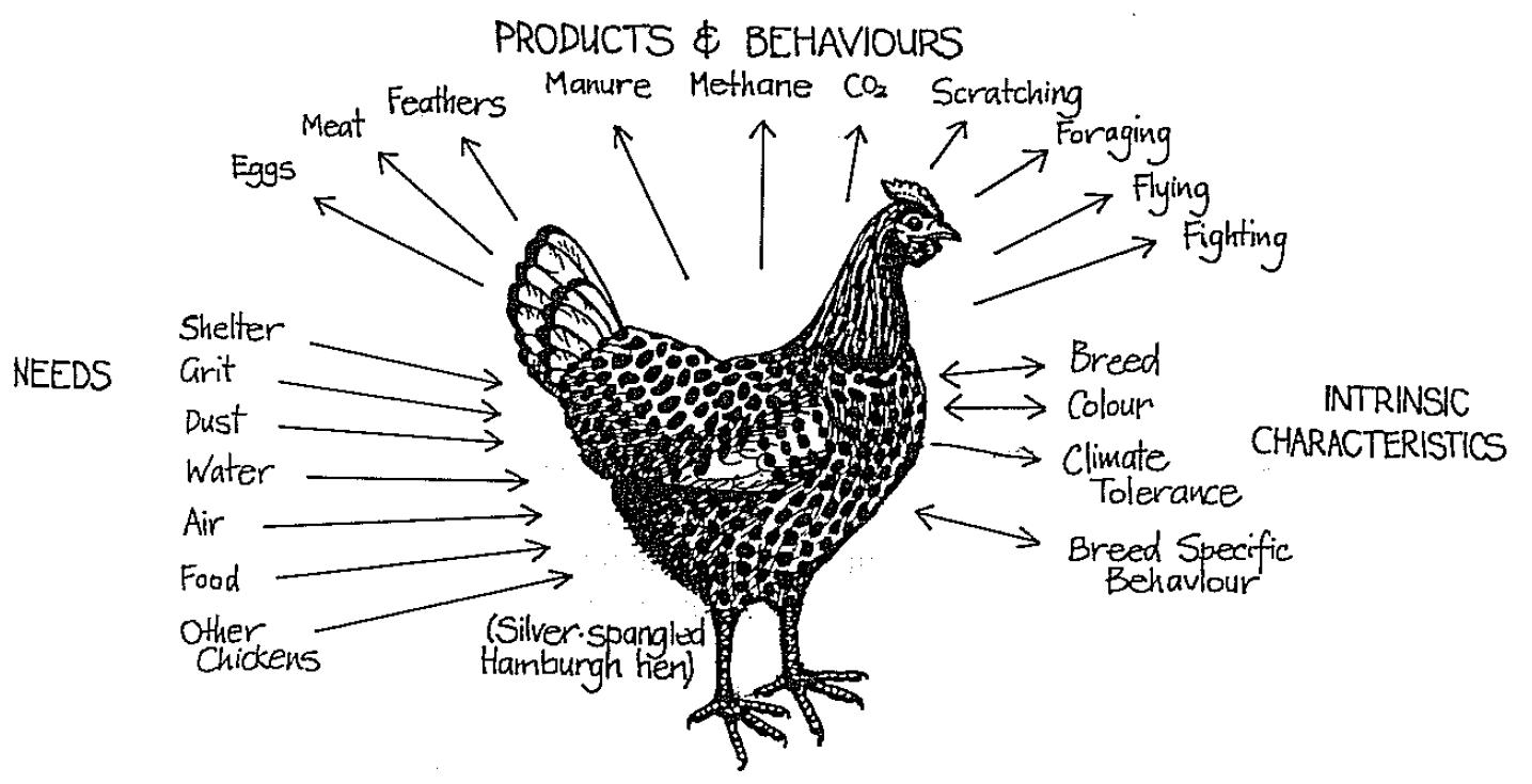 permaculture chickens permaculture west